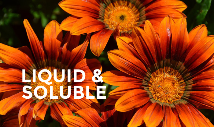 LIQUID AND SOLUBLE copy
